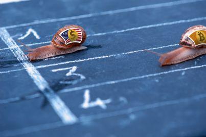 lumache corrono verso il traguardo