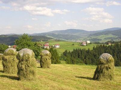 campagna agricoltura