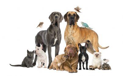 animali domestici insieme