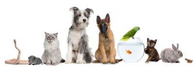 animali domestici di varie specie
