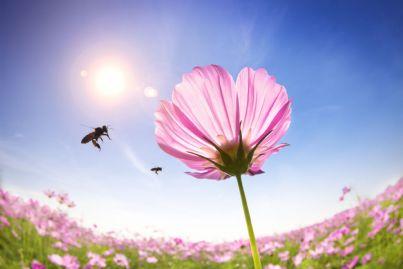 ape va verso un fiore in un giorno di primavera