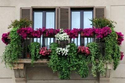 balcone pieno di fiori in un condominio