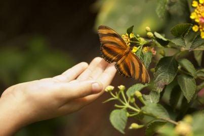 Bambina infanzia farfalla