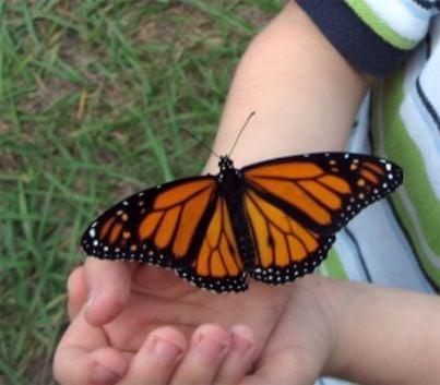 farfalla bambino infanzia