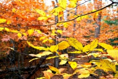 bosco piante