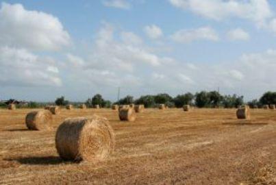campagna agricoltura colono