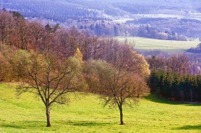 terreno campagna natura