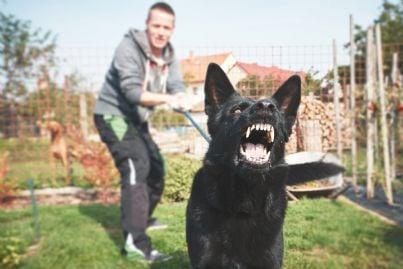 cane aggressivo cerca di scappare dal padrone per mordere