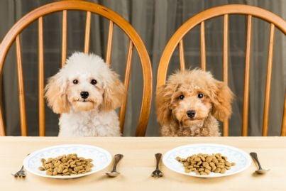 due cani a tavola con piatto di croccantini e forchetta
