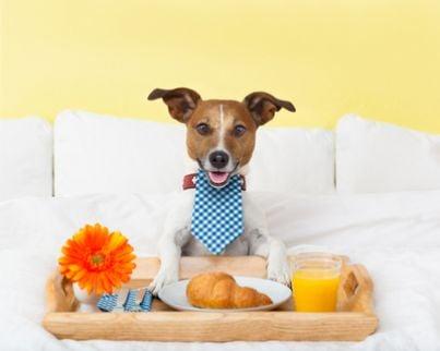 cane colazione animali
