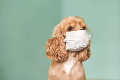 cane con mascherina per coronavirus