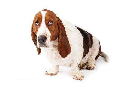 Cane mortificato