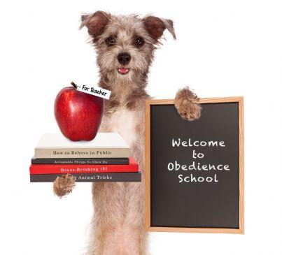 cane a scuola di obbedienza