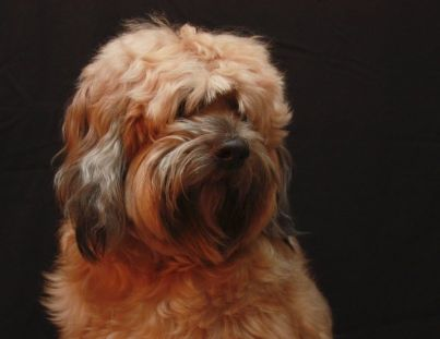 cane animali vivisezione