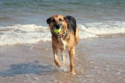 cane spiaggia id12328