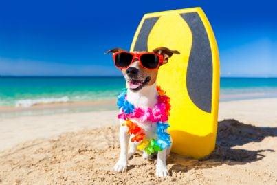 cane in spiaggia pronto per fare surf