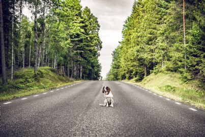 cane in strada da solo