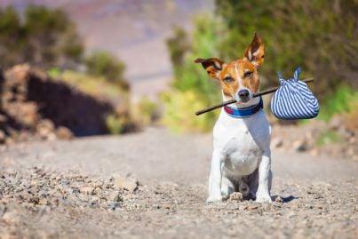 cane lasciato da solo in strada