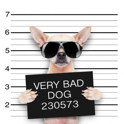 foto segnaletica di cane con occhiali