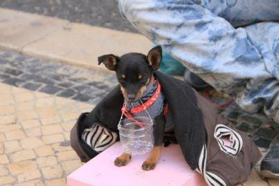 mendicante che chiede elemosina insieme al cane