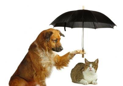 cane copre gatto con ombrello