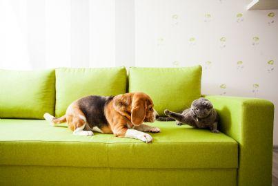 cane e gatto sul divano di casa