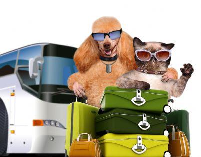 cane e gatto viaggiatori su autobus