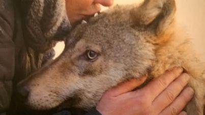 un cane lupo