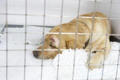 cane maltrattato chiuso in canile