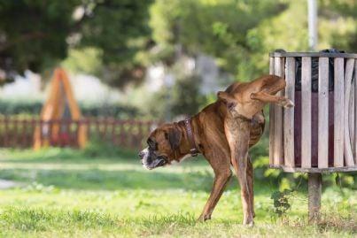 cane al parco fa pipi su un cestino