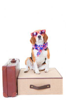 cane con valigie pronto per partire