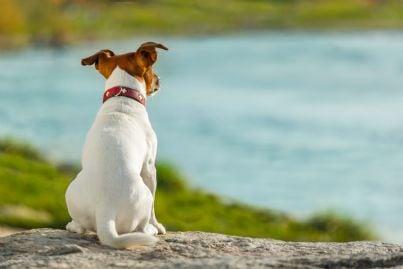 cane che pensa guardando il mare concetto di guardare al futuro