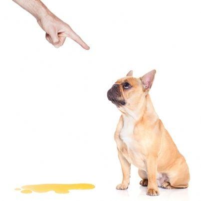 padrone che punisce il cane che ha fatto pipi
