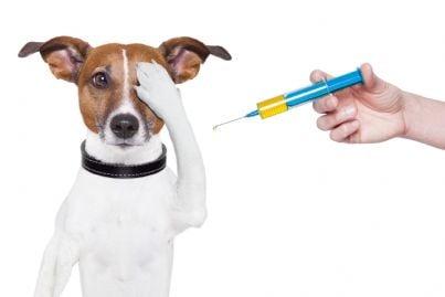 cane che copre occhi vedendo siringa del veterinario