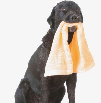 cane con panno sporco in bocca