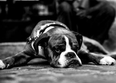 cane con espressione triste tenuto al guinzaglio