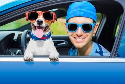 cane col padrone in auto per vacanze