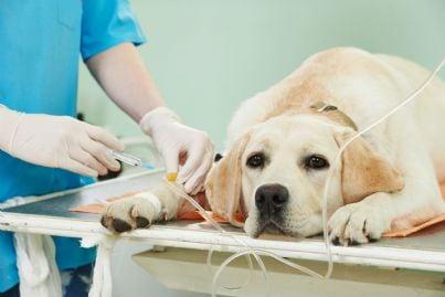 Roma, concessi due giorni di permesso retribuito per curare il cane malato