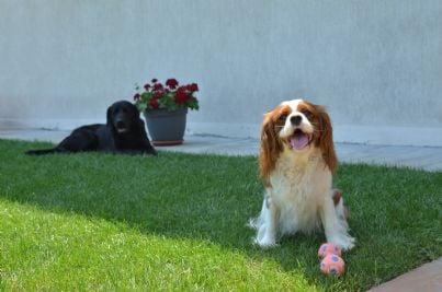 cani nel cortile del condominio