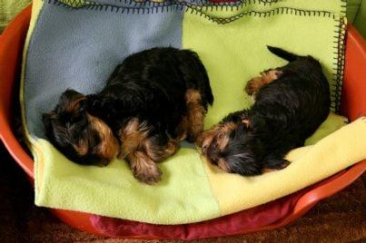 cani cuccioli animali id11137