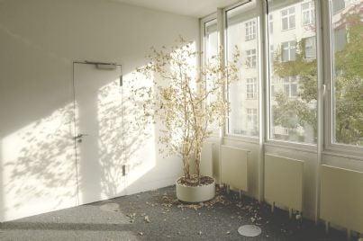 una pianta in una stanza vuota