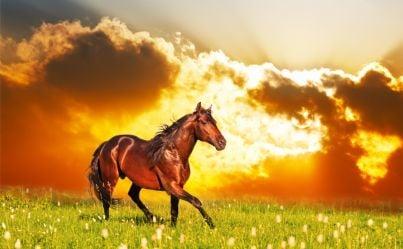 cavallo corre libero al tramonto