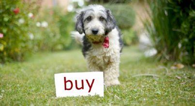 cane in giardino con su scritto compra