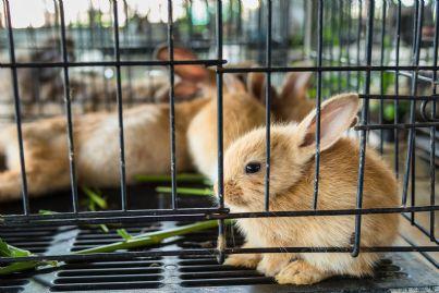 conigli in gabbia per allevamento