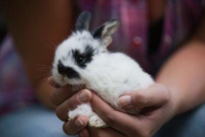 coniglio vivisezione animali