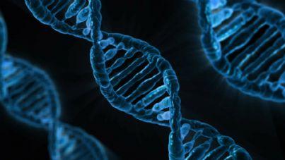 Immagine di frammenti del DNA