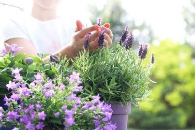 donna cura piante sul suo balcone