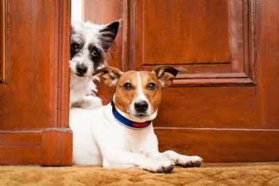 due cani sulla porta di casa