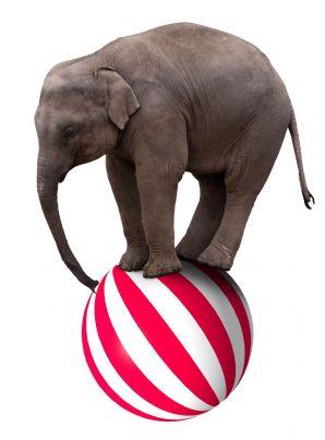 elefante da circo che sta in equilibrio su una palla