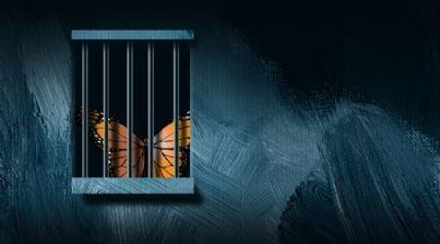 farfalla dietro le sbarre di un carcere